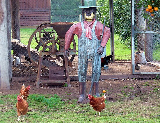 The Old Tin Chook Farmer by Michael John