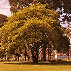 Spring Commences - Alexandra Gardens, Melbourne. by alexwaldmeyer