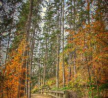 Path to Serenity by Myron Watamaniuk