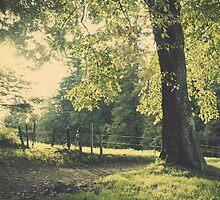 Premiers jours d'automne by Cyril Bays