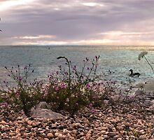 Pebble Shore by Robin Webster