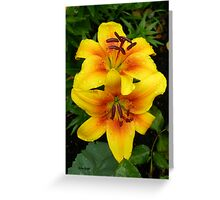 Golden Lilies .. In The Rain Greeting Card