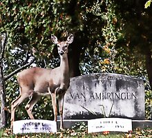 Cemetery guard by cherylc1