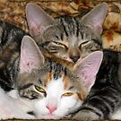 "Moire and Mickey ""O'Neill""[ L to R] 10/10 (6 Months) by Edmond J. [""Skip""] O'Neill"
