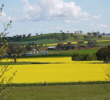 Aussie Spring Scene by SharonD