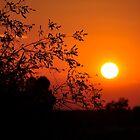 Red Sun by Karina  Cooper