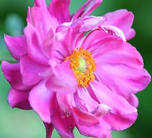 A Flower With No Name by Terry Aldhizer