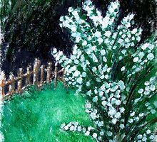 Snowball Bush by Felicity Deverell