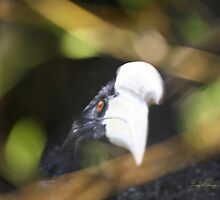 Black Vulture by Terry Aldhizer