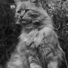 Posing Puss by Jon Staniland