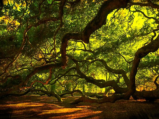 Side arms of the Angel Oak in Charleston by Susanne Van Hulst