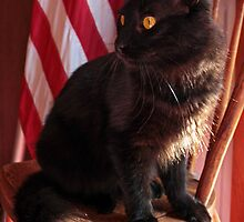 The Patriotic Cat by Megan Noble