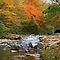 The Autumn Stream (Image must post to the group)