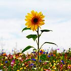 Sunflower Standing Proud by Bel Menpes