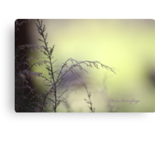 My Gate of Grass Canvas Print