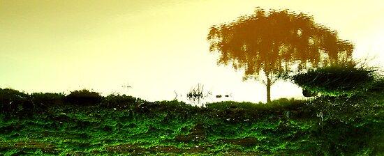 Dreams by Sameer R.K.