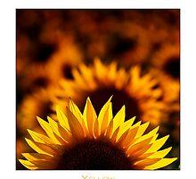 Yellow Dominant by Enrico Martinuzzi