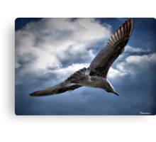 You Are The Wind Beneath My Wings.......... Canvas Print