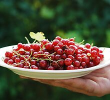 Redcurrants by Talida Pacurar