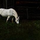 White horse by Jim Cumming
