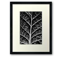 Leaf veins and texture Framed Print