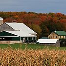 Fall At The Martin Farm by jules572