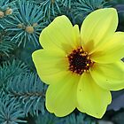 Fall Yellow Blossom by Diane Trummer Sullivan