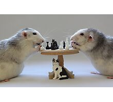 The real Chess Players :) Photographic Print