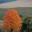 A Bright Spot on a Cloudy Fall Day by Geno Rugh