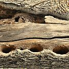 tree trunk by sendao