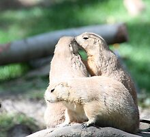 Prairie Dogs by Carol Bock