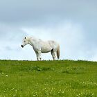 el caballo blanco by SUBI