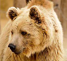 oso by ser-y-star
