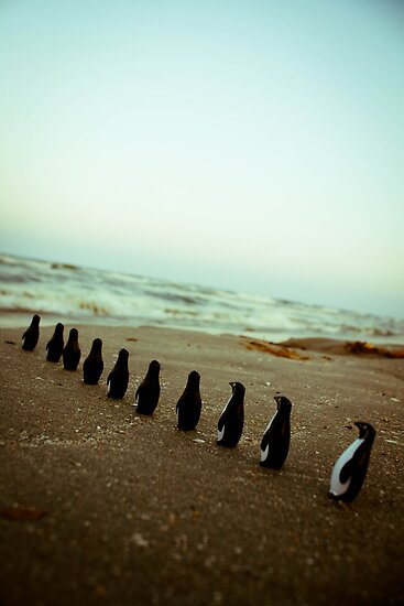 Penguin march by Iuliana Evdochim