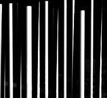 Lines In Black And White by Mitch Labuda
