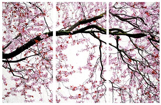 Cherry Blossoms- The Panel Series by Abara  Ijiomah