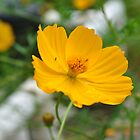 Ant on yellow flower by Bill Colman