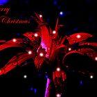 Merry Christmas by Josie Jackson
