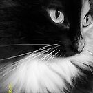 Fernie in black and white... by Laura-Lise Wong
