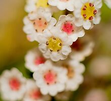Tiny Flowers by Kellie Metcalf