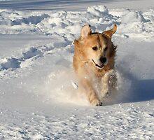 Lovin The Snow! by AliceMc