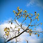 Autumn's Here by Milena Ilieva