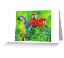 Magnificent Macaws Greeting Card