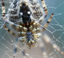 In the Web by Lee Van Hallam