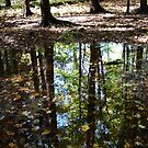 Autumn Puddle Reflections #9 by linmarie