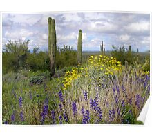 Picacho Peak Wildflowers Poster