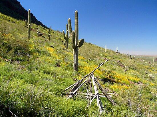 Spring Flowers in the Sonoran Desert by Lucinda Walter