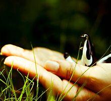 In a palm by Iuliana Evdochim