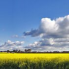 Canola by RedMonkey Photography