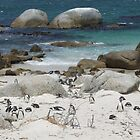 Penguins on the beach - The Boulders, Simondstown, South Africa by Fineli